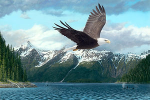 bald eagle flying over mountains in Alaska