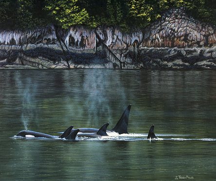 Orca's Near Rudyerd Bay