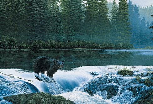 Naha River Black Bear