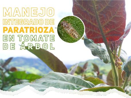 Capacitación en Manejo Integrado de Paratrioza en Tomate de Árbol