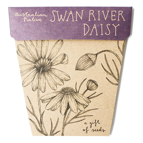 Gift of Seeds: 'Swan River Daisy'