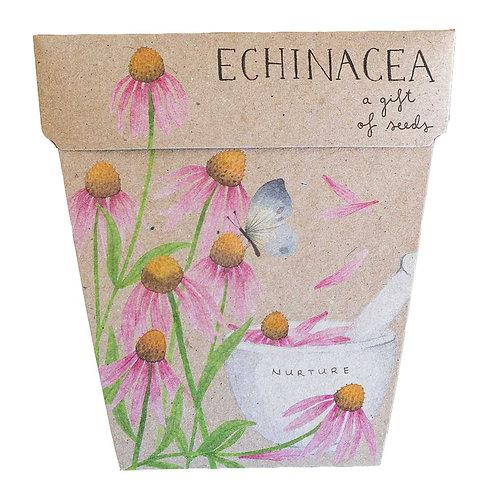 Gift of Seeds: 'Echinacea'