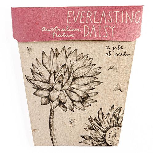 Gift of Seeds: 'Everlasting Daisy'