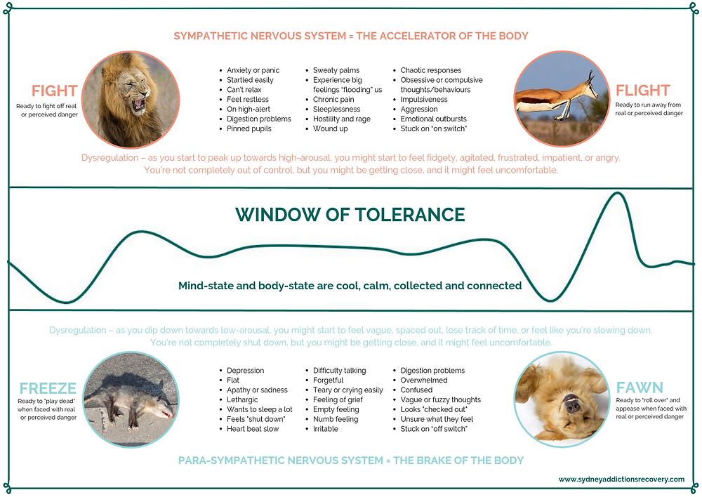 Window of Tolerance - Fight, Flight, Freeze or Fawn