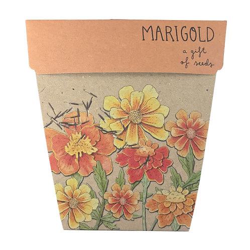 Gift of Seeds: 'Marigold'