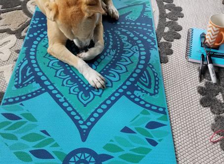 My Yoga Buddy Ranger🐕🐶💚💙