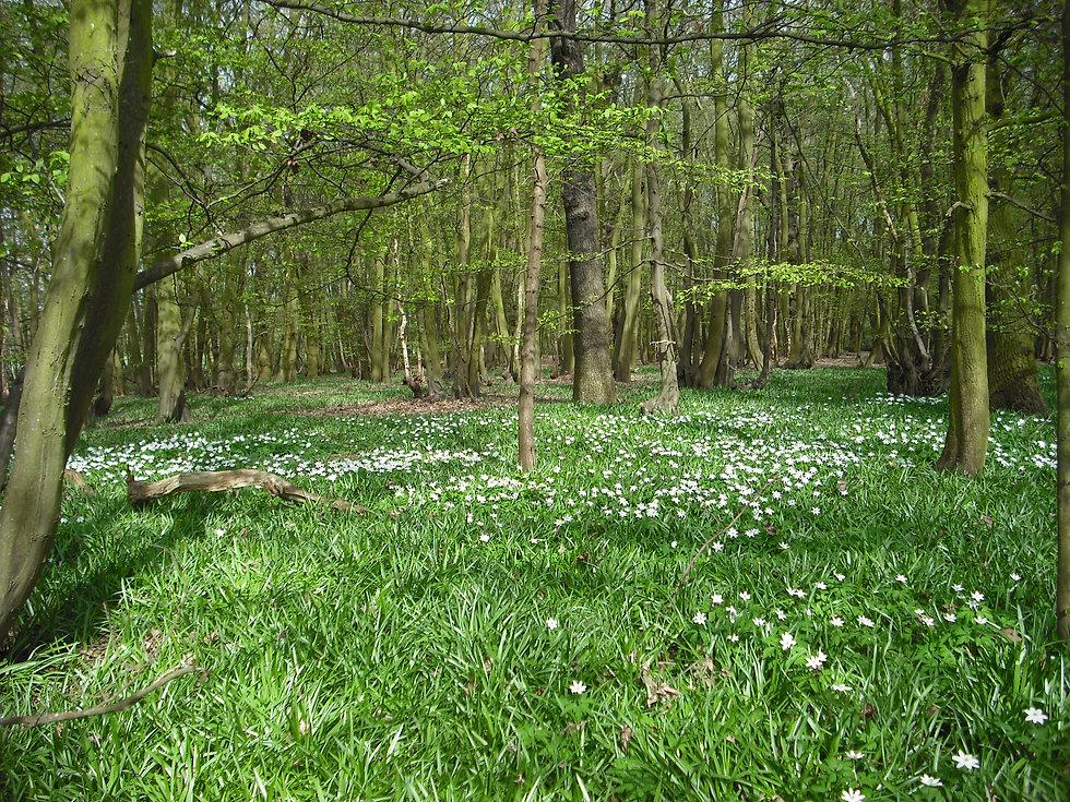 Essex Woodland.JPG