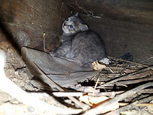 Feral kitten under a porch