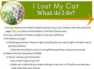 I lost my cat.png