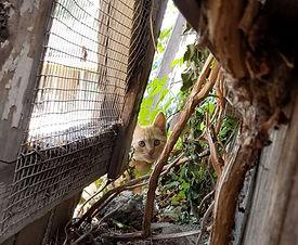 orange-tabby-feral-cat-outside.jpg