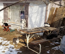 Feral cats on patio furniture
