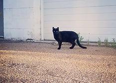feral-cat-outside.jpg