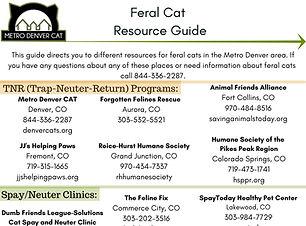 Feral-cat-resource-guide.jpg