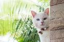 outside-cat.jpg