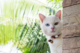 Pet-cat-outside-with-collar.jpg