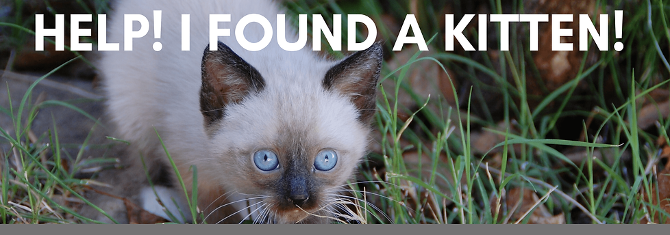 Help-I-Found-a-Kitten.png