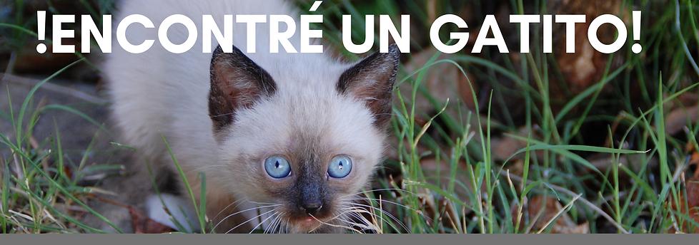 Spanish I Found a Kitten website banner.