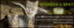 sponsor a spay banner.png
