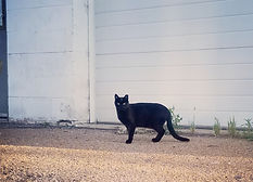 Feral cat in front of builing