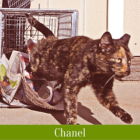 Chanel (1).png