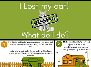I-Lost-my-cat-!-What-do-I-do-Infographic