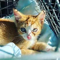 Kitten from Navajo.jpg