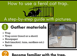 How to use a trap Infographic (1).png