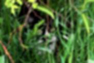Feral cat in bushes