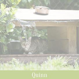 Quinn_edited.png