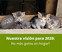 Spanish 2020 vision for website.png