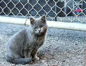 Gray-feral-kitten-outside.jpg