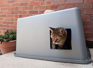 Feral-cat-using-a-feeding-station.jpg