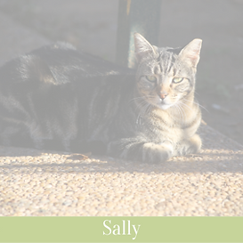 Sally (1)_edited.png