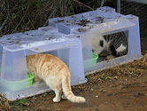 Feral-Cat-Feeding-Station.jpg