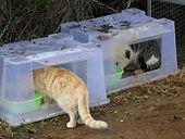 Feral-Cat-Feeding-Station.jpg