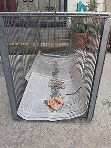 Baiting-a-feral-cat-trap.jpg