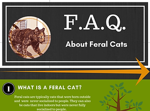 FAQ-About-Feral-Cats.png