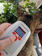 Cat-getting-scanned-for-a-microchip.jpg