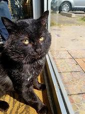 Chopps-the-former-feral-cat.jpg