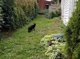 black-feral-cat-in-yard.jpg