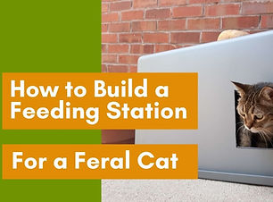 How-to-Build-a-feeding-station-for-a-fer