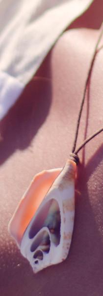 Conus Suturatus