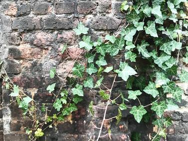 Hawksmoor's listed wall at Coram