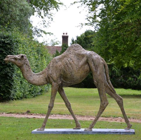Camel Lifesize