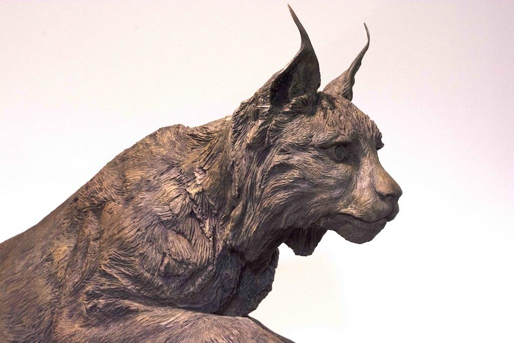 Lynx - detail