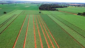 CRV Industrial, unidade de Minas Gerais, intensifica  pesquisa  com  novas variedades de cana...