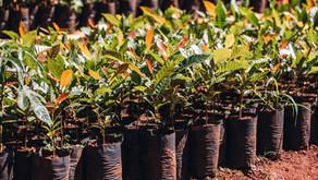CRV Industrial terá Centro de Educação Ambiental