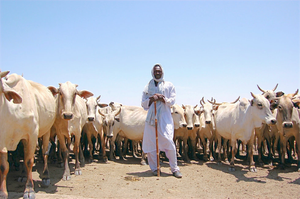 Cattle-herders-Kosti-area%20(1)_edited.jpg