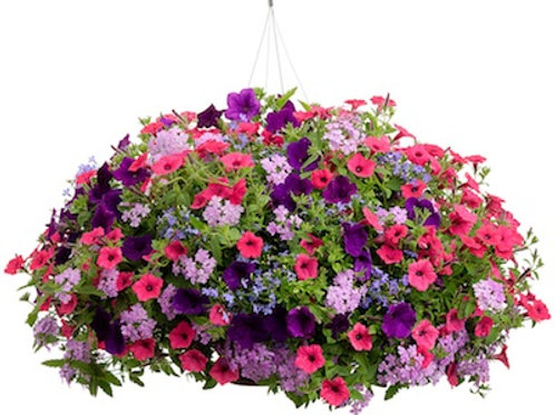 Hanging Summer Flower Basket