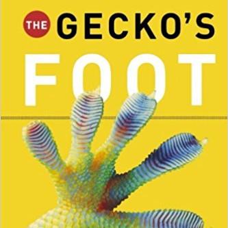 學蜘蛛人趴趴走 The Gecko's Foot
